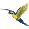 Flying Macaw - Illustrations -