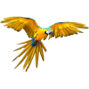 Golden Macaw Flying - Illustrations -