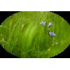 Grass Trava - 植物 -