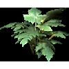 Grass Trava - Rośliny -