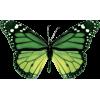 Green Butterfly - Ilustracje -