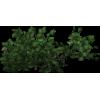 Green Filler Bush - Plants -