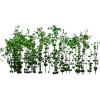 Green Screen Plant - Plants -