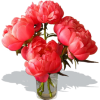 Hand Picked Red Flowers - Illustrations -