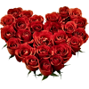 Heart of Roses - Illustrations -