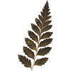 Leaf List - Piante -