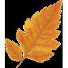 Leaf List - Plantas -