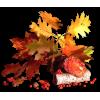 Leafs Lišće - Pflanzen -