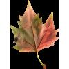 Leafs - lišće - Plantas -