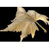 Leafs - lišće - Piante -