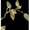 Leafs - lišće - Plants -