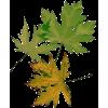 Leafs - lišće - Rastline -
