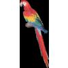 Majestic Macaw - Illustrazioni -
