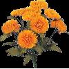 Marigold Bouquet - Plants -