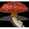Mushroom - Illustrations -