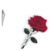 Note with a rose - Illustrations -