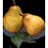 Pair of Pears - Voće -