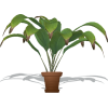 Potted Indoor Palm - Rośliny -