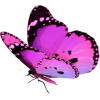 Purple Butterfly - Illustrazioni -