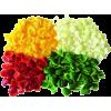 Raw Vegetables - Legumes -