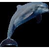 Rising Dolphin - Illustrazioni -