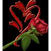 Rose - Illustrazioni -