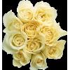 Roses Ruže - Biljke -