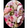 Roses Ruže - Plants -