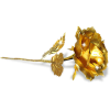 Single Gold Rose - Ilustracije -