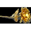 Single Gold Rose - Ilustrationen -