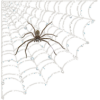 Spider at Home - Illustrations -