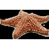Star Fish - 插图 -