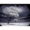 Tree Drvo - Nature -