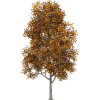 Tree Drvo - Plants -