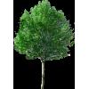 Tree Drvo - Plants -