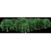 Tree Grove - Plants -