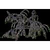 Winter Tree - Rastline -
