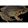 žaba - Animals -