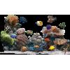 akvarij - Illustrations -