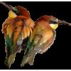 birds ptica - Animals -