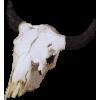 bones - Items -