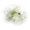 bouquet roses - Plants -