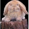 bunny on cut tree - Animali -