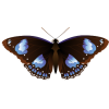 butterfly - Illustrations -
