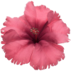 cvijet - Illustraciones -