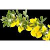 cvijet - Piante -