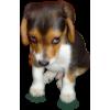 dog - Animali -