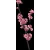 flower tree - Plants -