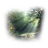 forest - Priroda -