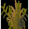 grass - Rośliny -